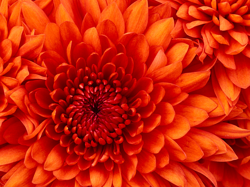 http://www.tplps.hlc.edu.tw/uploads/tadgallery/2009_03_12/9_Chrysanthemum.jpg Photo Test.